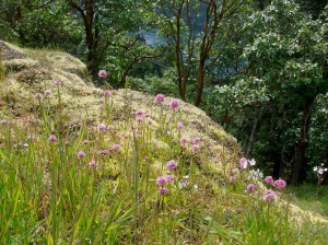 meadow-300x224