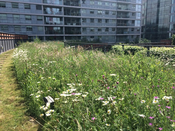 Green roof in Central London