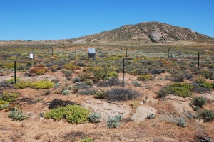 The site, where the soil moisture sensors are installed as a compound of climate stations, is protected from grazing animals by means of a fence. ©Bettina Weber