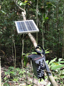 An ARU powered by solar energy recording in the Taï national park, Côte d'Ivoire. ©Ammie Kalan
