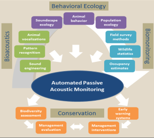 A summary of the various disciplines and expertise needed to develop automated PAM systems that can be used for applied conservation efforts in the field. ©Ammie Kalan