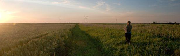 Dawn bird survey in arable farmland. © Rob Robinson/BTO