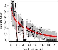 Modelled (red and grey) hunting-only culling rates of feral cats vs. actual culling by hunting rate before (black) and after (white) the addition of trapping and poisoning © Nick Beeton