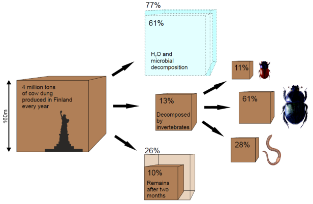 The scale and players of the ecosystem service of dung removal, as identified by volunteers implementing a joint experiment. The left-hand cube shows the total volume of cattle dung produced in Finland per year (ca 4 billion kg of dung; Statue of Liberty superimposed for comparison). Focusing on the dung deposited in pastures, we estimated the relative fractions (middle cubes) disappearing due to evaporation of water and microbial activity alone (top), decomposing through the action of invertebrates (centre), and remaining after two months (bottom), respectively. The lighter box refers to the situation in northernmost Finland, the darker cube to southernmost Finland. Of the dung decomposed by invertebrates, dor beetles account for 61%, (right-hand sub-cube, centre) ) earthworms for 28% (bottom) and dung dwelling Aphodius-species for 11% (top), respectively. (From: Kaartinen et al. Ecology 94: 2645–2652; © Riikka Kaartinen.)