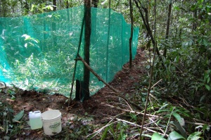 "A MESOCOLSURE in the rain forest of the Southern hemisphere. © Gustavo ""Tata"" Schiffler."