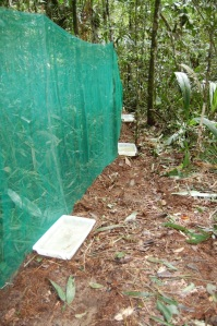 "Plastic trays used to record beetles rattling into the MESOCLOSURE walls. © Gustavo ""Tata"" Schiffler."