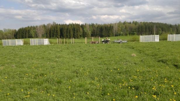 Building MESOCLOSURES in a Finnish pasture. ©:Saija Lähteenmäki.