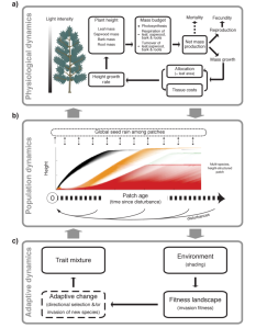 Key processes modelled within the plant package.