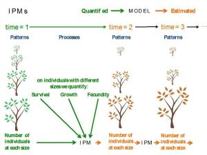 Common implementation of IPMs