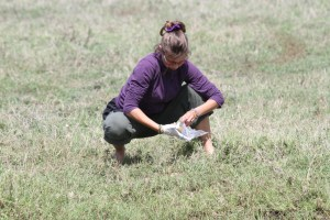 Eve Davidian collecting a faecal sample from a spotted hyena in the Ngorongoro Crater. © Oliver Höner