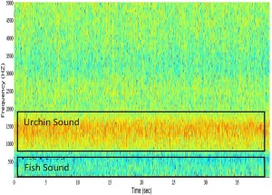 Spectrogram from a New Zealand reef showing urchin sounds in the mid-frequency range and lower-frequency fish vocalizations. Color represents intensity. ©Craig Radford