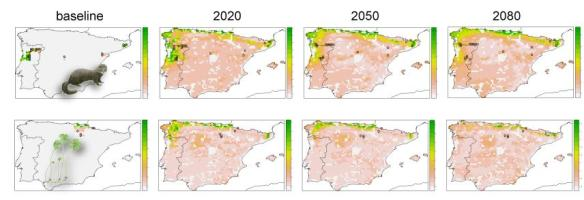 Climate change dispersal corridors for the European mink and the four leaf clover in Iberian Peninsula. The areas were selected to minimize the overall cost and to accommodate specified levels of species' persistences.