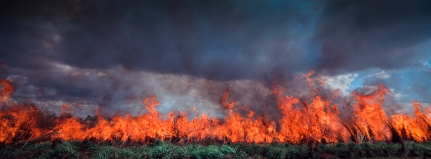 A proscribed burn off of Gamba Grass south of Darwin. © Glenn Campbell
