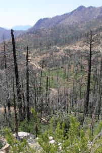 In the Sierra Nevada, large fires can frequently disrupt sampling plans for the year. rSPACE provides a tool to assess how such unexpected deviations can impact results. © Jody Tucker