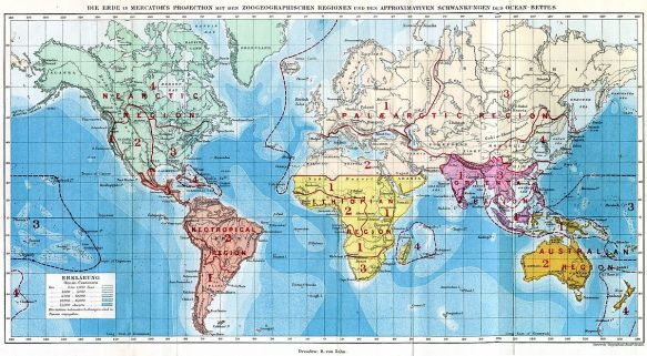 The biogeographic regions identified by Alfred Russel Wallace from The Geographical Distribution of Animals (1876)