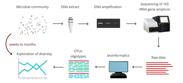 Recipe for a microbial diversity analysis with molecular technologies.
