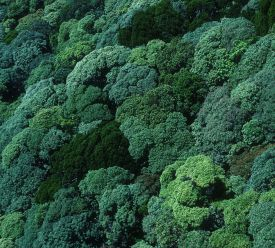 Like an X-ray, airborne LiDAR allows you to peer through the dense canopy, revealing the structure of the forest beneath. ©Robert Kerton, CSIRO