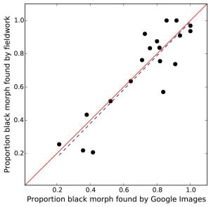 Proportions black morph black bears found fieldwork vs. that found by the Google Images method with 1:1 line in red. Each point represents a subspecies in a state of western North America