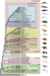 Pielou's book Biogeography was one of the first to use cladograms. © Michelle Spaulding, Maureen A. O'Leary, John Gatesy