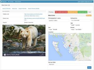 Screenshot of the Morphic web application, showing an image result of a Kermode bear from Google Images and some of the fields of the completed associated survey form for the black bear case study.
