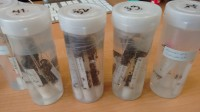 Invertebrates are collected using standardised field sampling protocols and usually identified based on their morphology. The taxa lists obtained this way are then used to assess stream water quality based on associated bioindication values of the individual taxa. But identifying juvenile invertebrates by morphology isn't possible for all collected taxa.