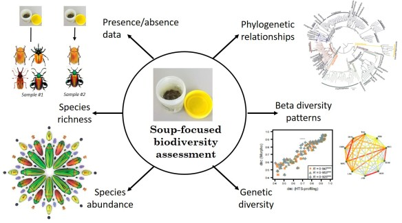 """Biodiversity attributes and analyses that can be assessed following the """"soup-based"""" (or sample-by-sample) approach (as in Gómez-Rodríguez et al. 2015, 2017). Beetle artwork © Christopher Marley."""