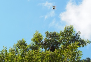 Technologies, such as drones, open new opportunities for wildlife monitoring ©J. Lahoz-Monfort, UMelb.