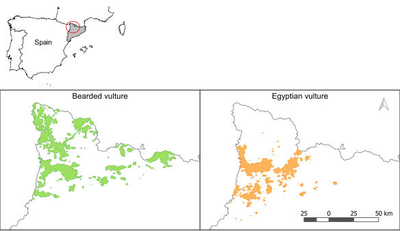 Habitat areas of the bearded vulture and the Egyptian vulture in the study area. Both species are concentrated in the red circle.
