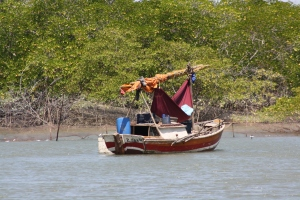 A fisherman netting with the tides for fish in a mangrove estuary of Maranhão, Brazil. In Brazil such artisanal fishing is still the main source of sustenance for a large part of the population living at the coast. © Kim Vane