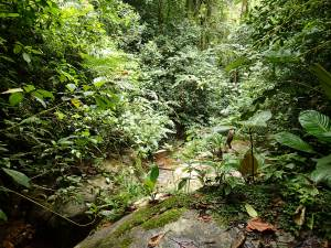 A stream transect that has been monitored for amphibians since 1998 by Dr. Karen R. Lips.