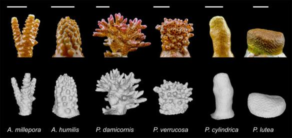 Photographs and 3D models of the six study species. Scale bars = 1 cm.