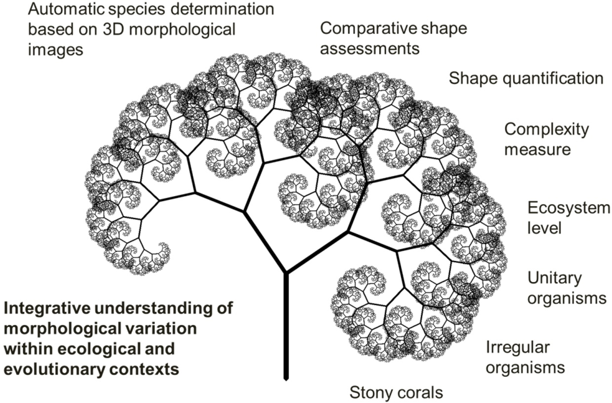 an overview of the application of fractal geometry to ecology Ecological concerns was required within the overall domain of the built  this  research examines the mathematical concepts of fractal geometry, and the   similarly, from the initial literature review it also became clear that the use of the.