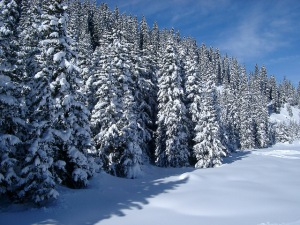 Processes that occur in winter are a significant component of annual carbon and nutrient cycles. ©Travel Stock Photos