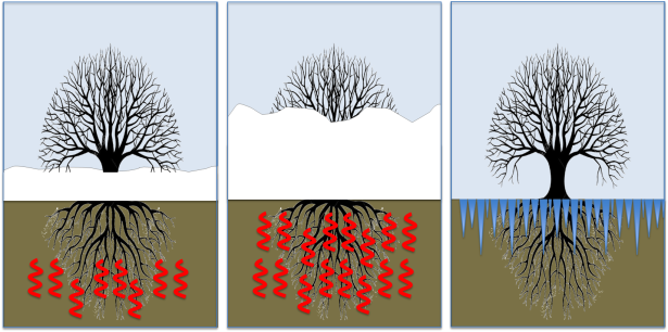Snow insulates soils from cold air (left). Deeper snow leads to warmer soil (centre). Less snow exposes soils to winter air (right).