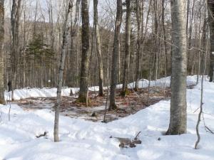 Experimental snow removal plot. © Annie Socci 2012