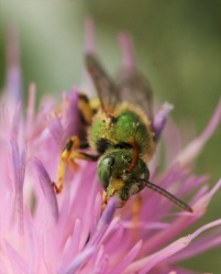 Interactions between plants and pollinators tend to be highly generalized.