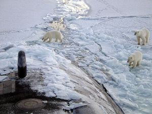 Methods for finding polar bears can be surprisingly similar to methods for finding submarines!