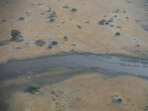Spot the elephants in the Okavango delta, Botswana. Image taken from fixed wing aircraft. © Tracey Hollings