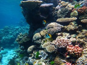 Like each coral, every single primary research study contributes to the larger picture.  © Wise Hok Wai Lum