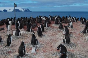 Camera system in place in an Adélie and gentoo penguin colony ©Jefferson Hinke, NOAA Fisheries