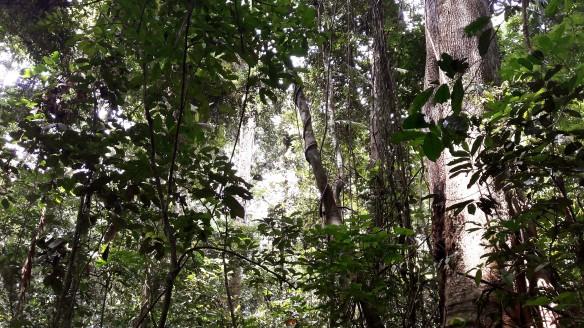 The complex forest ecosystem at Lopé National Park. ©Jeremy Cusack