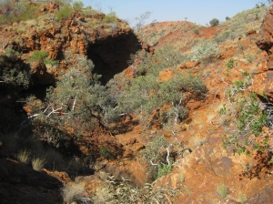 Gorge country in the PIlbara. ©Steve Murphy