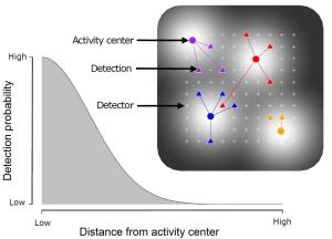 SCR models simultaneously estimate the detection function and density of individual activity centres. A half-normal detection model is generally used.