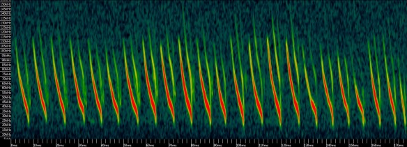 A spectrogram of Natterer's bat search-phase echolocation calls (time on the x-axis, frequency on the y-axis, and amplitude as colour scale)