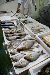 This method could help to trace the origin of fish in supermarkets and fishmongers. ©Jorge Royan