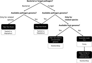 Proposed workflow for analyzing dual RNA-seq datasets when genomic resources are limited.