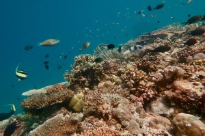 Coral reefs are home to an incredibly diverse array of species ©Jordan Casey