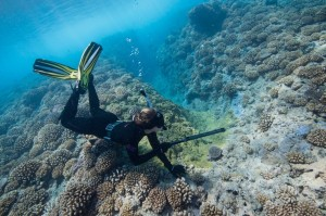 Spearfishing to collect fishes in French Polynesia ©Jennifer Adler Owen
