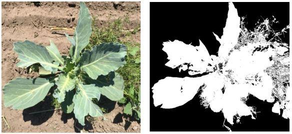 两种可以得到比例数据的测量:叶片损坏的比例和植被覆盖百分比。
