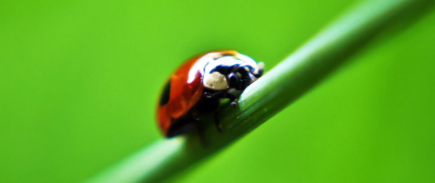 ladybird-stock_thumb